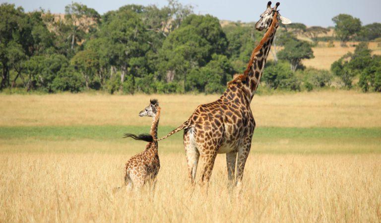 Teste tes connaissances sur les animaux terrestres